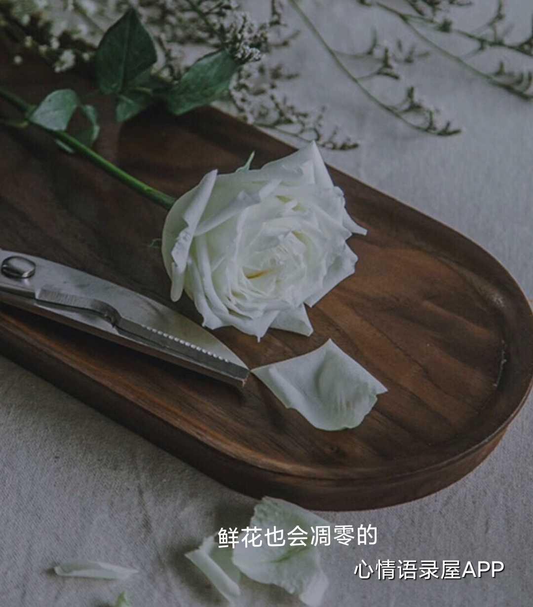 http://www.58100.com/index/detail/763350