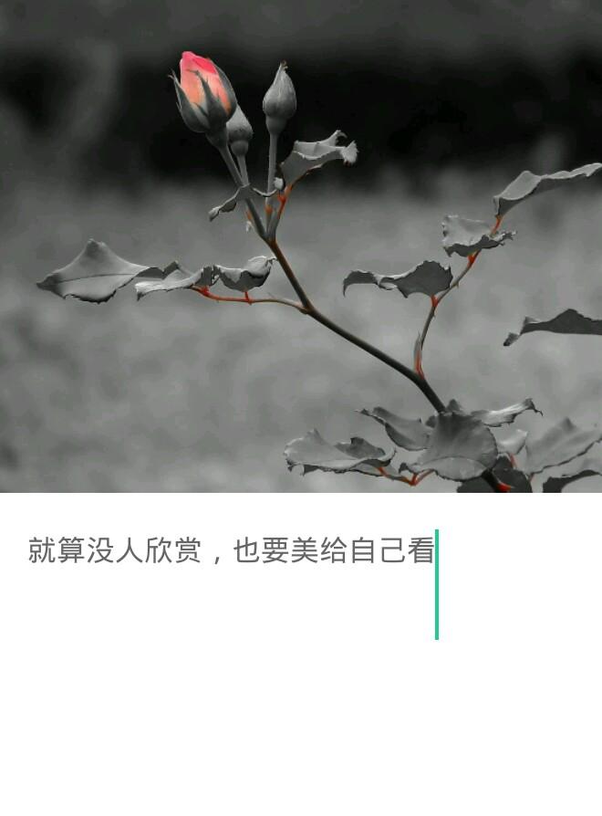 /pid/602100.html