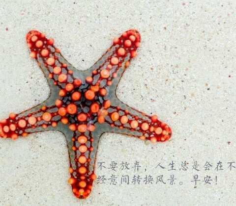 http://www.elycia-webdesign.com/pid/677159.html