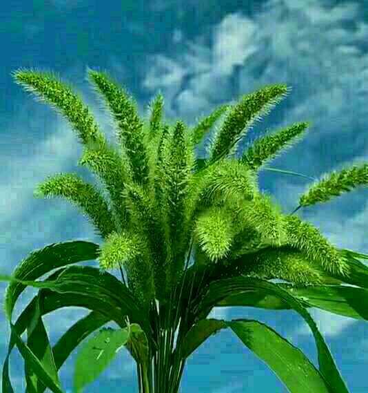 http://sucai.58100.com/data/upload/images/202006/159350873376822.jpg