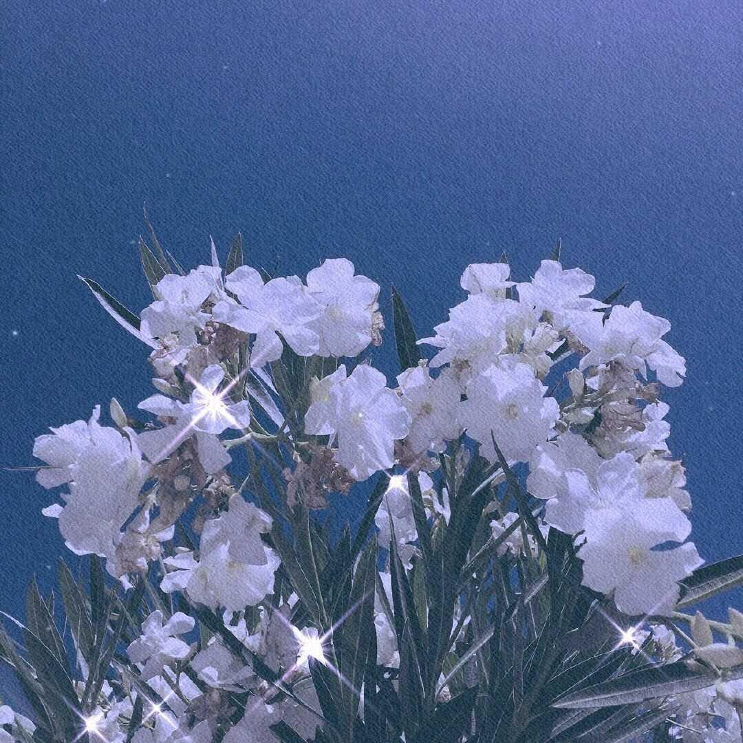 http://sucai.58100.com/data/upload/images/202008/159714603477232.jpg
