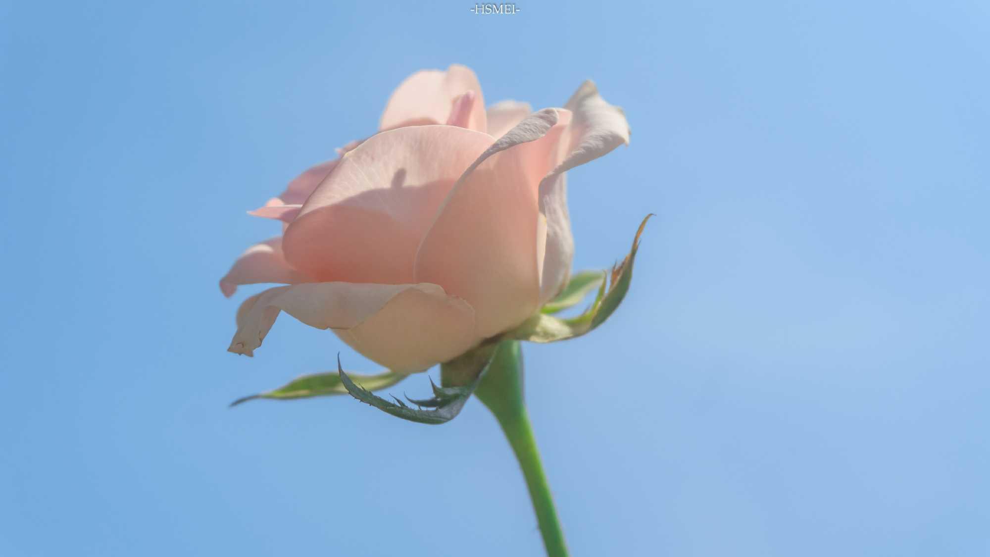 http://sucai.58100.com/data/upload/images/202008/159878994640161.jpg